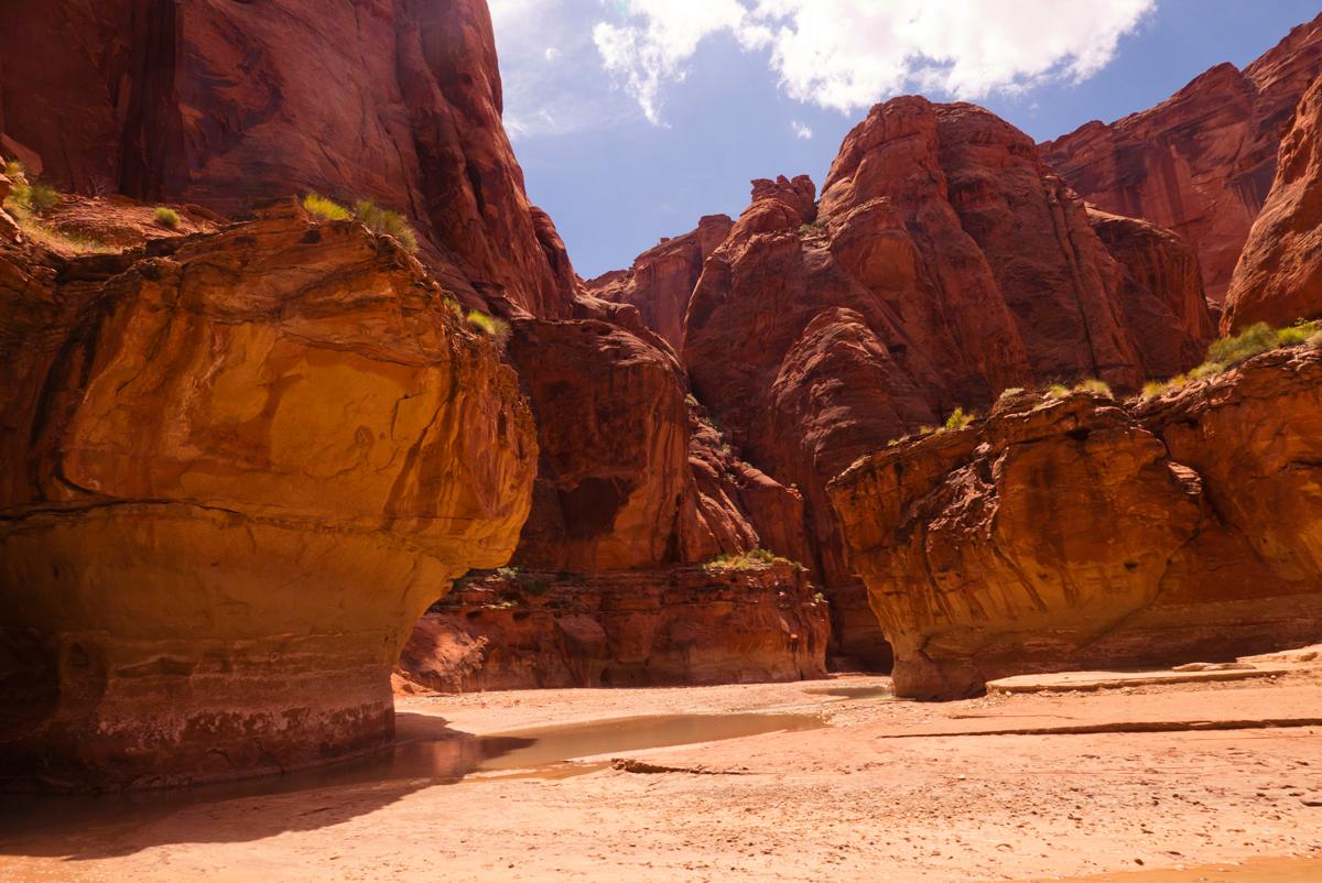 37_tyler-beckwith_wentforahike_paria-canyon